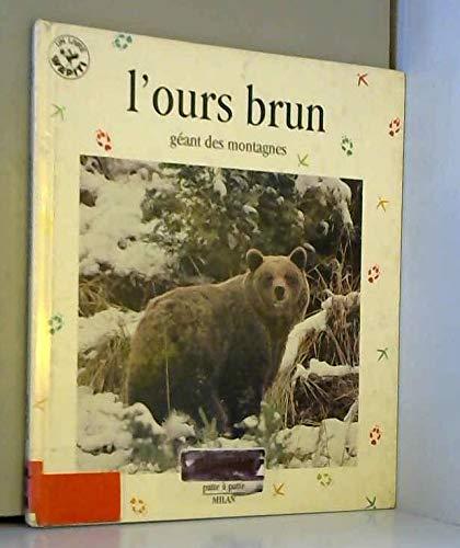 L'ours brun : géant des montagnes